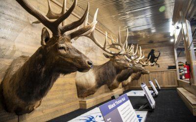 Rocky Mountain Elk Foundation Great Elk Tour