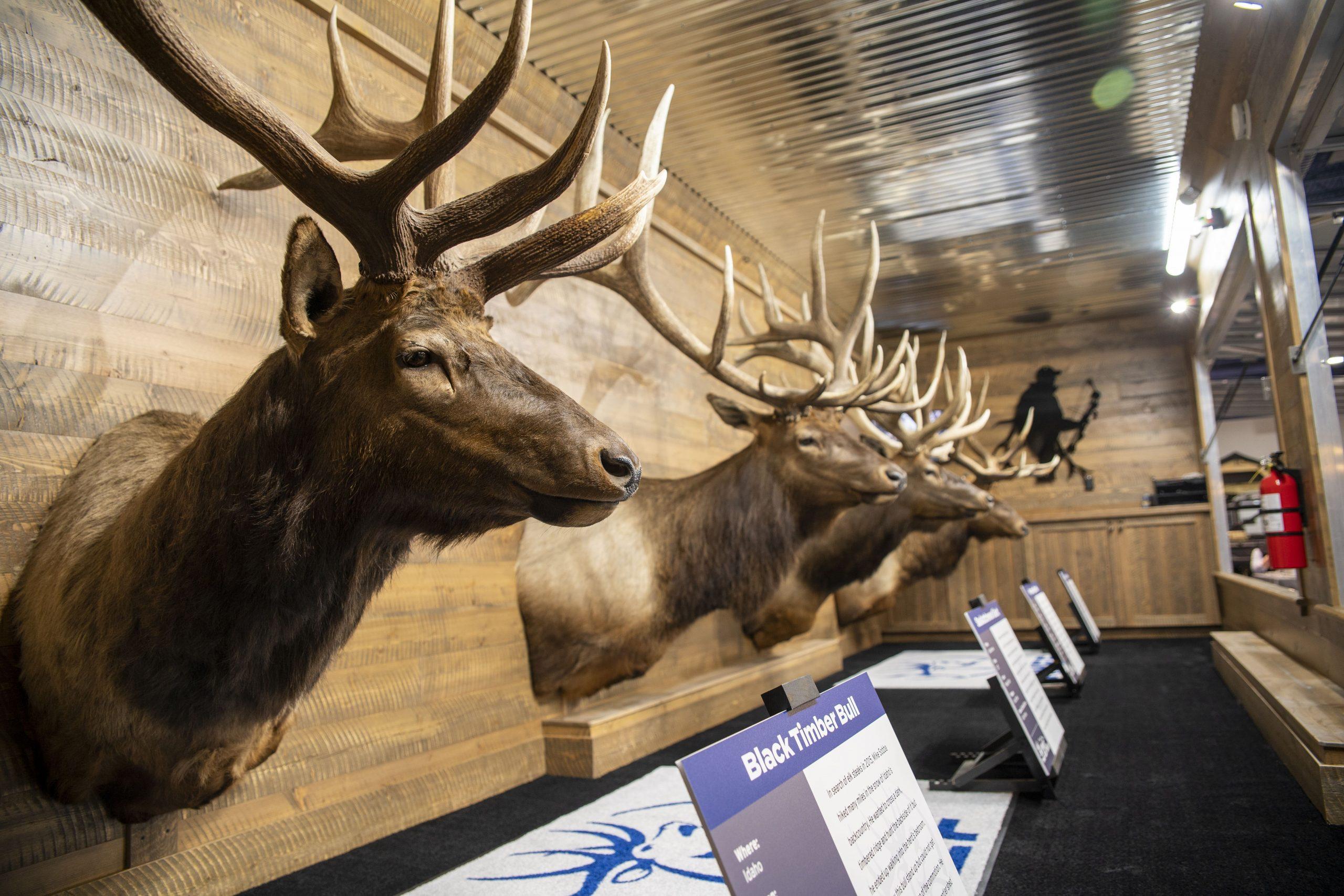 Great Elk Tour 2